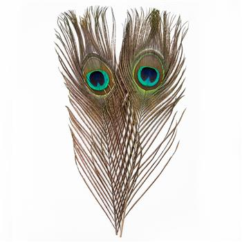 10 x 30cm Natural Peacock Feather House Decoration