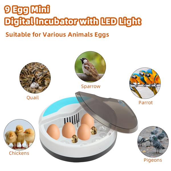 [US-W]9 Egg Automatic Poultry Incubator with LED Lights